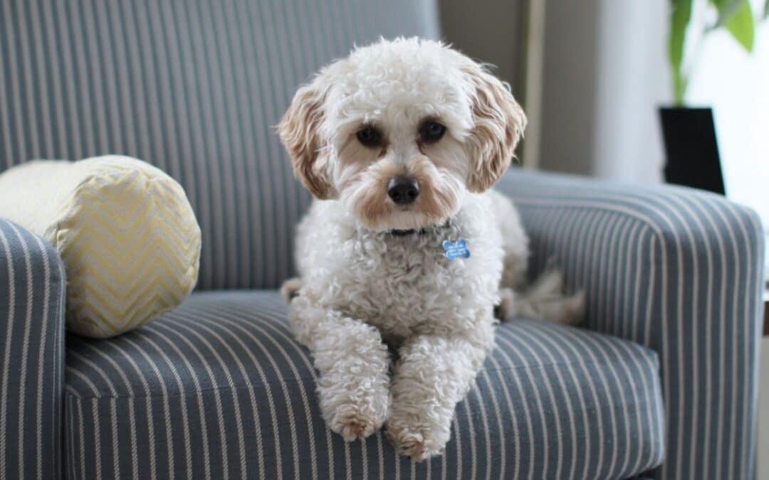Lämna hund ensam hemma – tips