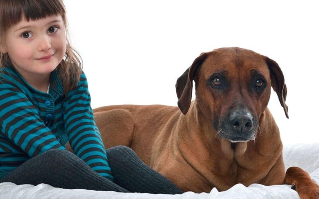 Hundar och barn – funkar det?