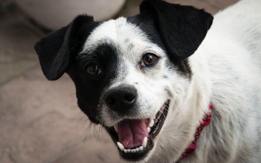 Har din hund separationsångest?
