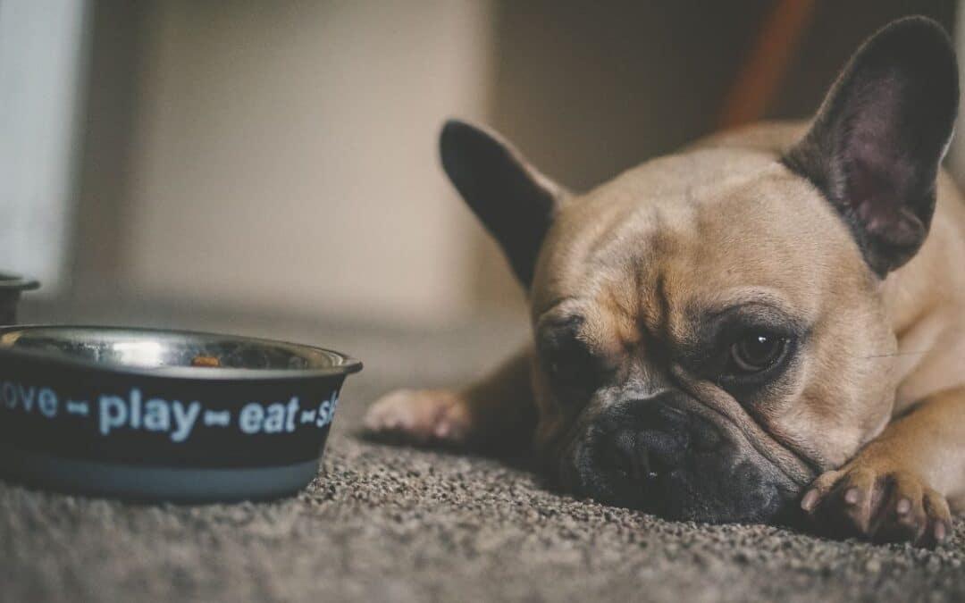 Hunden äter inte – varför?