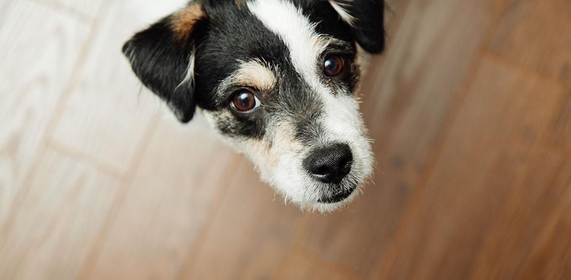 Gnällande hund – varför?