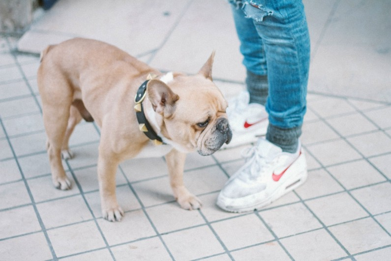 Hund gör utfall mot andra hundar