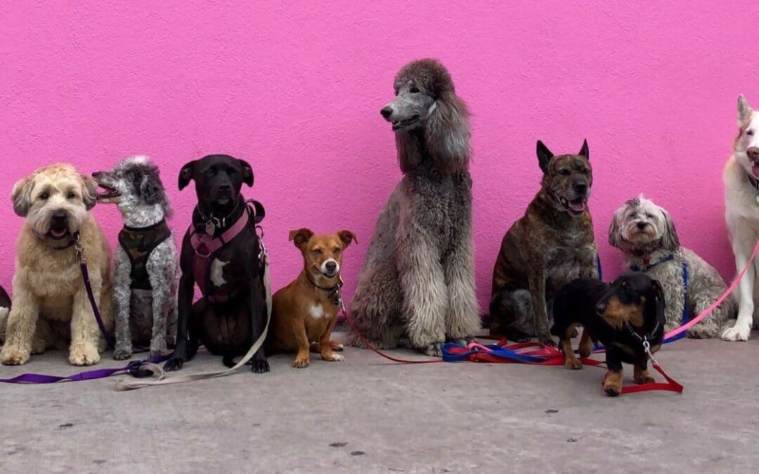 Att välja hund – ras och personlighet?