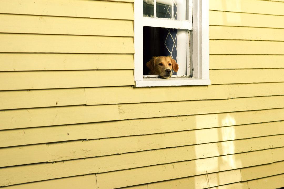 Har du en fönsterhund?