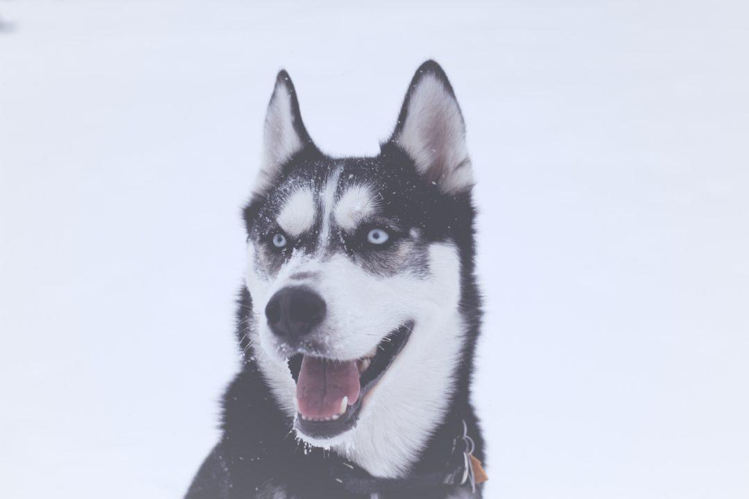 Hundmatch – hitta rätt hund