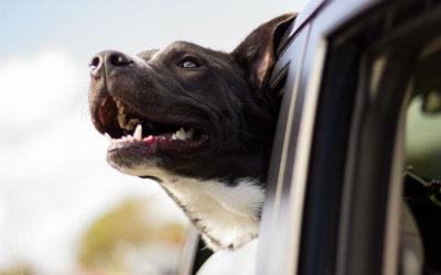 Ett enklare hundliv – vad väljer du?