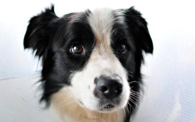 Hund piper och gnäller hela tiden – hjälp