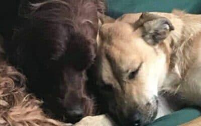 Ensamhetsträning och separationsångest – så hjälper du din hund