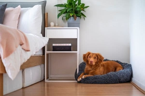 Online hundkonsultation - 3 timmar